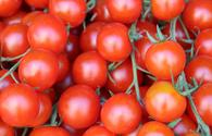 Tomato export volumes disclosed