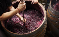 Volume of wine exports revealed