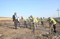 Absheron region's residents join initiative to plant 650,000 trees