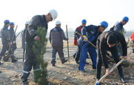 "Azerbaijan's Azeraluminium holds tree planting campaign in memory of national leader Heydar Aliyev <span class=""color_red"">[PHOTO]</span>"