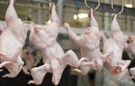 Azerbaijan looking for potential markets for export of chicken products