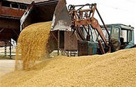 Turkmenistan's import of grain, legumes from Turkey significantly up