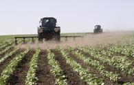Azerbaijan considering farmers' applications for getting subsidies