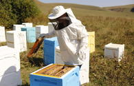 "Beekeepers to be allocated $3m in subsidies <span class=""color_red"">[PHOTO]</span>"