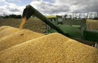 Azerbaijan discloses volume of grain harvest
