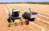 Azerbaijan reveals data on latest grain harvesting