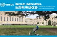 UNECE announces global photo contest on flora and fauna