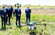 Azerbaijan starts use of drones in agriculture