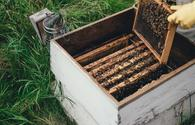 Honey fairs expected to open in Baku