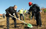 "Azerbaijani ministries, AzerGold company hold landscaping campaign on Chovdar field <span class=""color_red"">[PHOTO]</span>"