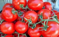 Kazakhstan bans import of Azerbaijani tomatoes
