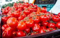More Azerbaijani companies allowed to export tomatoes to Russia