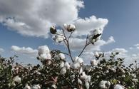 "Azerbaijani Ministry of Agriculture holds meeting on results of cotton growing dev't <span class=""color_red"">[PHOTO]</span>"