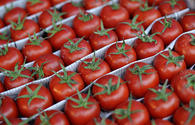 Russia bans import of tomatoes from more Azerbaijani producers