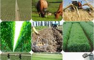 UN to register three Azerbaijani regions as globally important agricultural heritage system