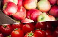 Russia lifts ban on tomatoes, apples import from 27 Azerbaijani enterprises