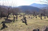 Azerbaijan preparing special program to restore forests in liberated lands