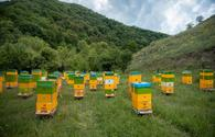 """Thousands of beekeeping farms moving to Kalbajar <span class=""""color_red"""">[PHOTO]</span>"""