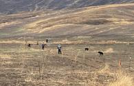 Mine clearance continues on Azerbaijan's liberated lands