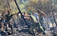 """New details of extinguishing forest fires in Turkey by Azerbaijani firefighters disclosed <span class=""""color_red"""">[PHOTO/VIDEO]</span>"""