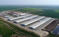 Azerbaijan invests $1.4bn in agricultural parks