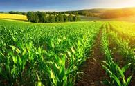 Small agricultural farmers must meet new export requirements - Food Safety Agency of Azerbaijan